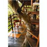 treetop-balcony_1455967it.jpg