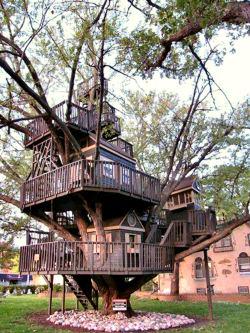 tree_housex.jpg