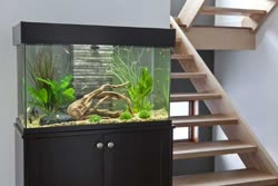 fluval-accent_lifestyle-2._sl500_t.jpg