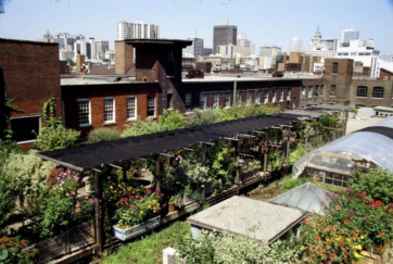 401_richmond_rooftop_garden2t.jpg