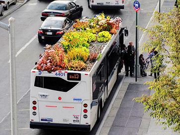 growbus-ed01t.jpg