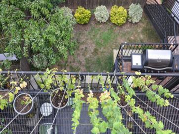 Rooftop_Corn_1_rect540t.jpg