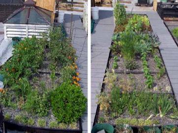 2008_05_21-rooftopgardent.jpg