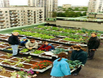 RooftopRevolutiont.jpg