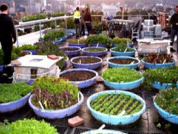 rooftop-community-garden-lando_68df53f7c1cba41d089b589aac6d5814_3x2_jpg_300x200_q85t.jpg