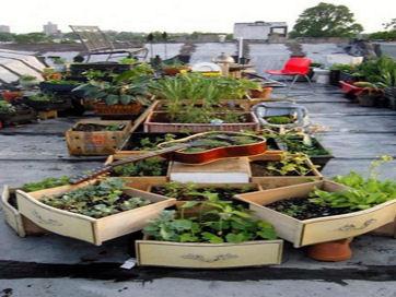 rooftop-garden1_rect540t.jpg
