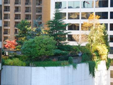 rooftop-gardent.jpg