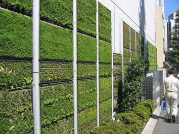 green-walls2t.jpg