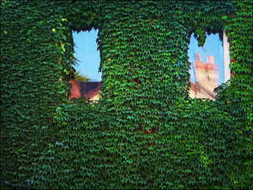 green_wall_two_windowst.jpg