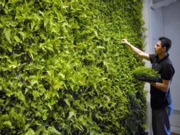 green-wallt.jpg