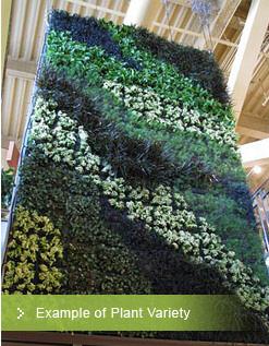 green_wall_plant_variety.jpg