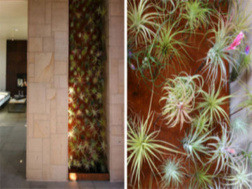18-air-plant-green-living-wall-bardessono-hotel-yountville-californiat.jpg