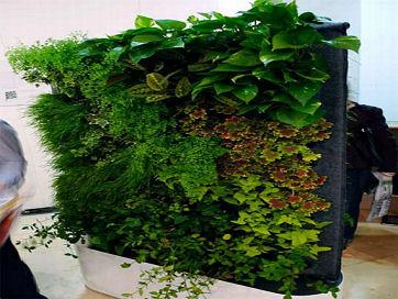 Green_Wall_1273738331t.jpg