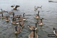 canada-geeset.jpg