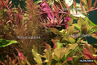 redplantst.jpg