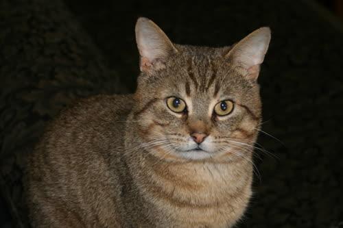 Lokki the wonder cat