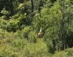 deer-buttt.jpg