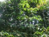 DSC02083s.jpg