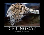 ceiling_catt.jpg