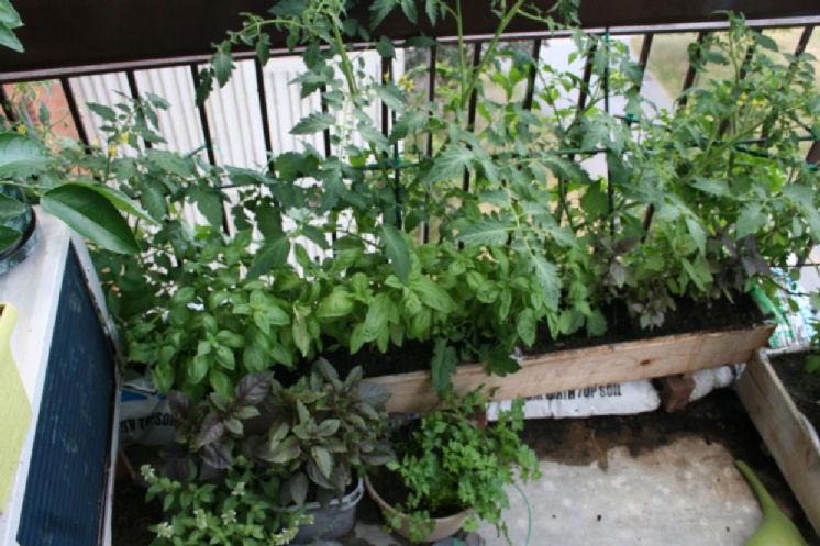 patio_gardent.jpg