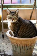 cat_tree_experiment_t.jpg