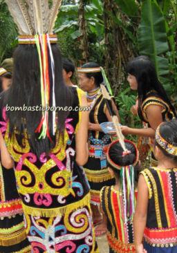 14-0-Copr_2013_Bombastic_Borneot.jpg