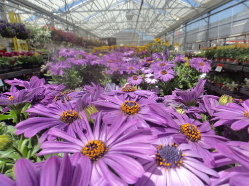 Plant Shopping - April 30