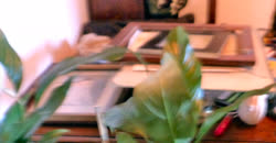 Frames-3t.jpg