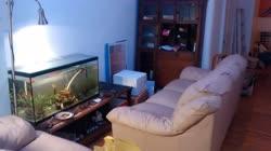couch_and_loveseatt.jpg