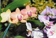 southern_ontario_orchid_society_show-0_1992x.jpg