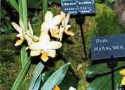 southern_ontario_orchid_society_show-1_1992x.jpg