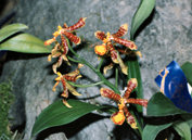 southern_ontario_orchid_society_show-2_1992x.jpg