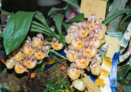 southern_ontario_orchid_society_show-4_1992x.jpg