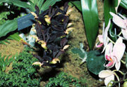 southern_ontario_orchid_society_show-5_1992x.jpg