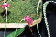 southern_ontario_orchid_society_show-6_1992x.jpg