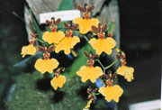 southern_ontario_orchid_society_show-9_1992x.jpg