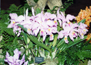southern_ontario_orchid_society_show-a_1992x.jpg