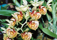 southern_ontario_orchid_society_show-e_1992x.jpg