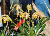 southern_ontario_orchid_society_show-g_1992x.jpg