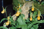 southern_ontario_orchid_society_show-i_1992x.jpg