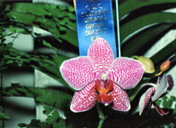 southern_ontario_orchid_society_show-k_1992x.jpg