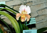 southern_ontario_orchid_society_show-m_1992x.jpg