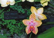 southern_ontario_orchid_society_show-n_1992x.jpg