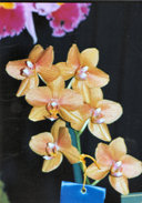 southern_ontario_orchid_society_show-p_1992x.jpg