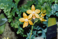 southern_ontario_orchid_society_show-q_1992x.jpg