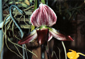 southern_ontario_orchid_society_show-s_1992x.jpg