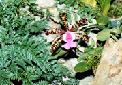 southern_ontario_orchid_society_show-t_1992x.jpg