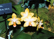 southern_ontario_orchid_society_show_1992x.jpg